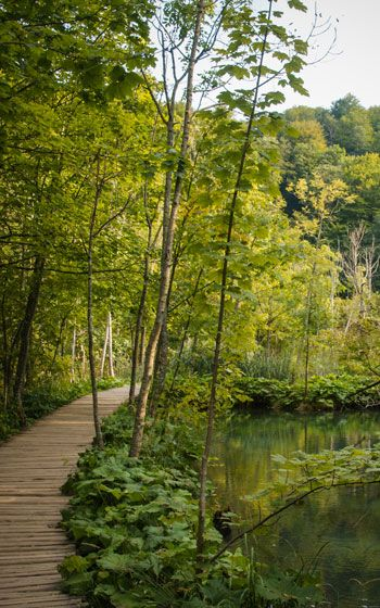 Pasarela encima de un lago con abundante vegetación en los Lagos de Plitvice