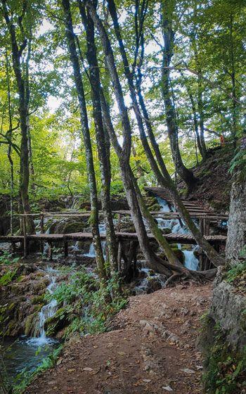 Árboles entre un pequeño salto de agua en el parque de los Lagos de Plitvice