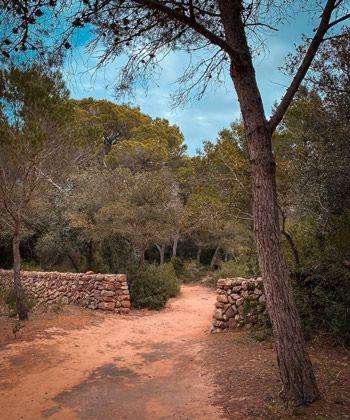 camino por el gr de Cala Pilar