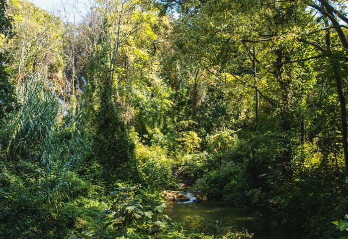 Frondosa vegetación del parque nacional de Krka