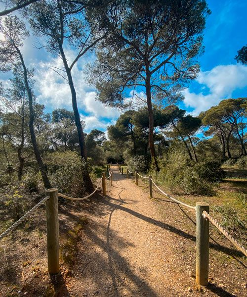 Camino hasta Cala Macarella
