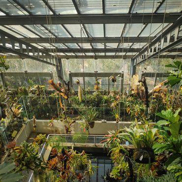 interior del invernadero del jardin botanico en la visita a madrid en 3 dias