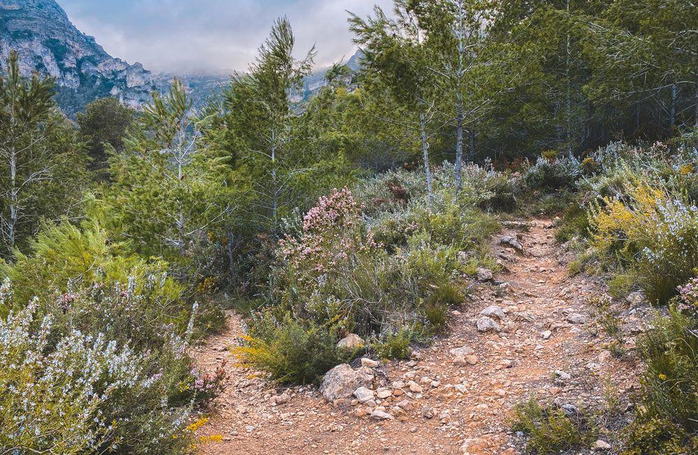 camí a la ruta del morral de cabrafeixet del perelló